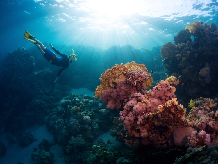 Lạc xuống thủy cung với loạt ảnh đại dương đẹp ngỡ ngàng - 11