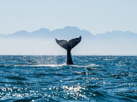 Lạc xuống thủy cung với loạt ảnh đại dương đẹp ngỡ ngàng - 3