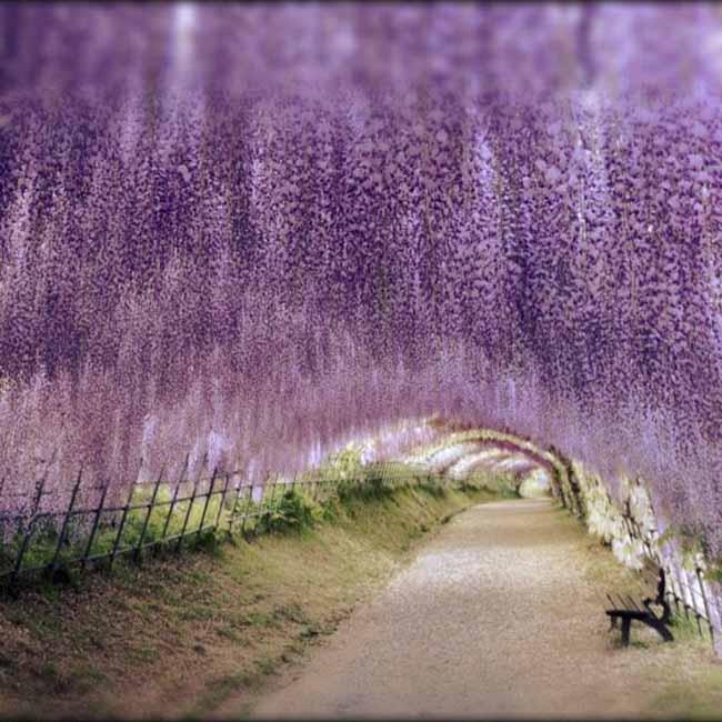 Những địa điểm đẹp như mơ nhưng chưa hề có tên trong những tour du lịch Nhật Bản - 11