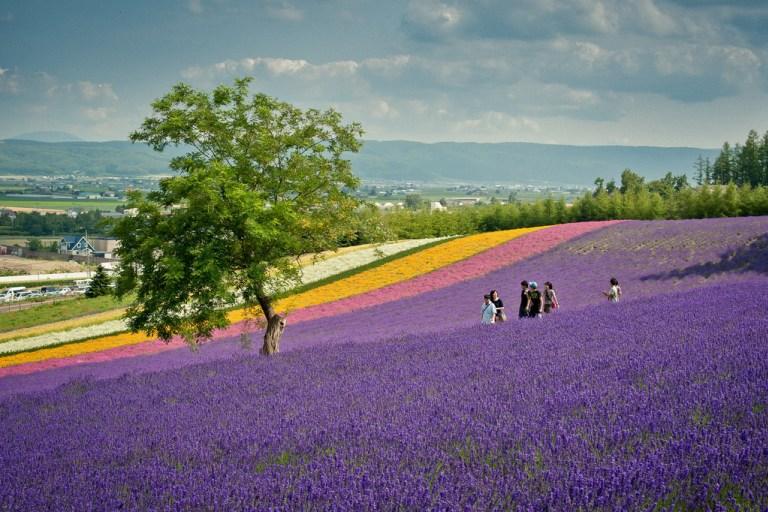 Thiên đường hoa đẹp mê li ở Nhật miễn phí vào cửa cho du khách - 7