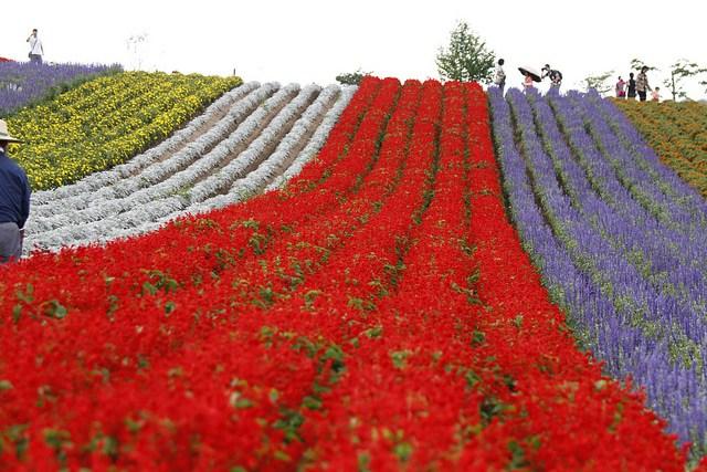 Thiên đường hoa đẹp mê li ở Nhật miễn phí vào cửa cho du khách - 1