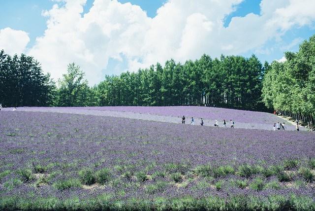 Thiên đường hoa đẹp mê li ở Nhật miễn phí vào cửa cho du khách - 9
