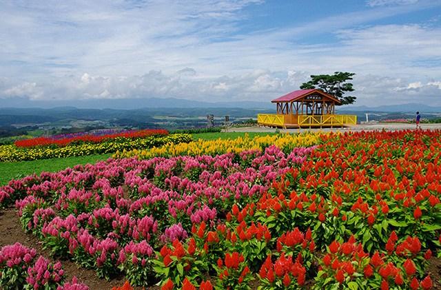 Thiên đường hoa đẹp mê li ở Nhật miễn phí vào cửa cho du khách - 5