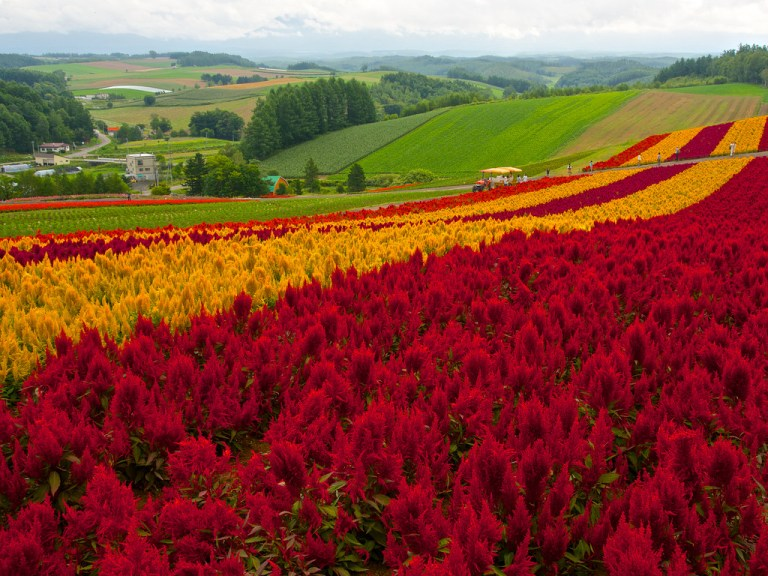 Thiên đường hoa đẹp mê li ở Nhật miễn phí vào cửa cho du khách - 3