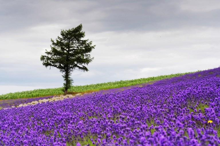 Thiên đường hoa đẹp mê li ở Nhật miễn phí vào cửa cho du khách - 6