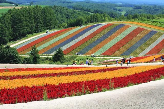 Thiên đường hoa đẹp mê li ở Nhật miễn phí vào cửa cho du khách - 10