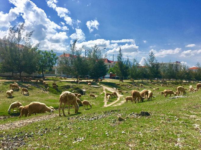 Hai ngày du hí trên vùng đất đẹp như mơ của nắng và gió mang tên Ninh Thuận - 26