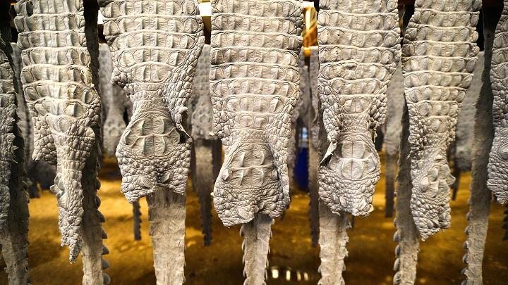 Choáng có ngành công nghiệp nuôi cá sấu ở Thái Lan - 11