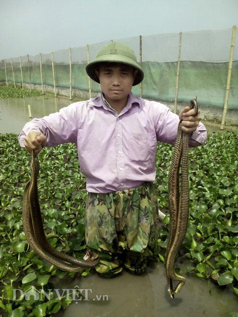 """Chàng """"Quách Tĩnh"""" ngắm mưa rào, đợi rắn đẻ, thu tiền rủng rỉnh - 6"""