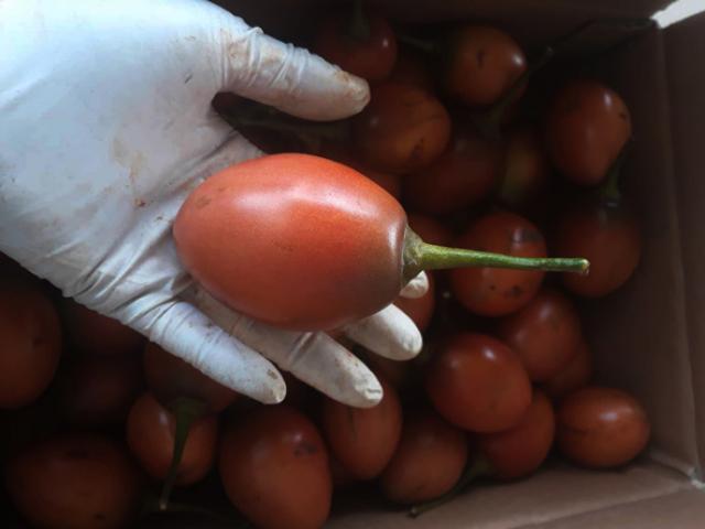 """Cà chua lạ đắt gấp 15 lần cà chua thường mà vẫn """"cháy hàng"""""""