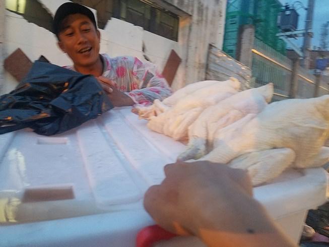 'Giải mã' gà không đầu siêu rẻ tại Việt Nam - 1