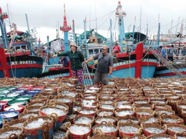 """Ngư dân Ninh Thuận """"hốt"""" cả chục triệu sau một đêm nhờ cá Nam muộn"""