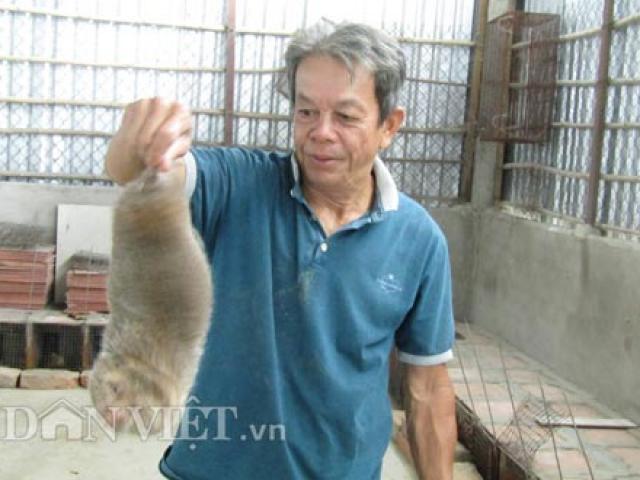 """Nuôi """"chuột rừng"""", giỏi đào hang, cho ăn tre già, có 20 triệu/tháng"""