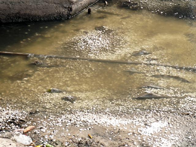 """Bất ngờ rải đá trắng xuống sông Tô Lịch đen ngòm trước ngày """"bảo bối"""" Nhật hết hạn thử nghiệm"""
