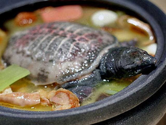 Người TQ tin ăn loại động vật này giúp kéo dài tuổi thọ, nhưng người nước ngoài lại rất sợ